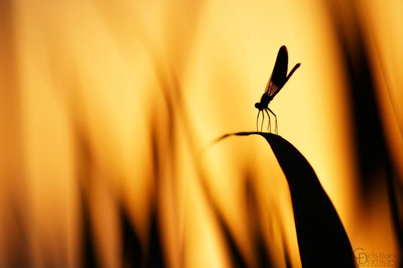 Fotografia Naturalistica di Cristiano Damiano