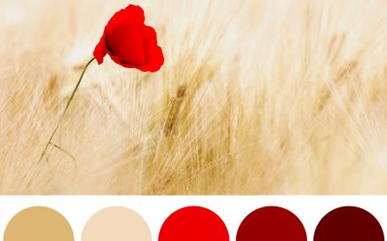 La palette dei colori: i colori complementari sono opposti tra loro e creano contrasti emozionanti